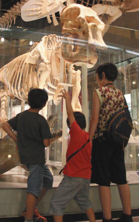 写真はきょうだい3人のエネルギーを発散させるため、西へ東へさまざまな場所に連れ出した=東京・上野の国立科学博物館で