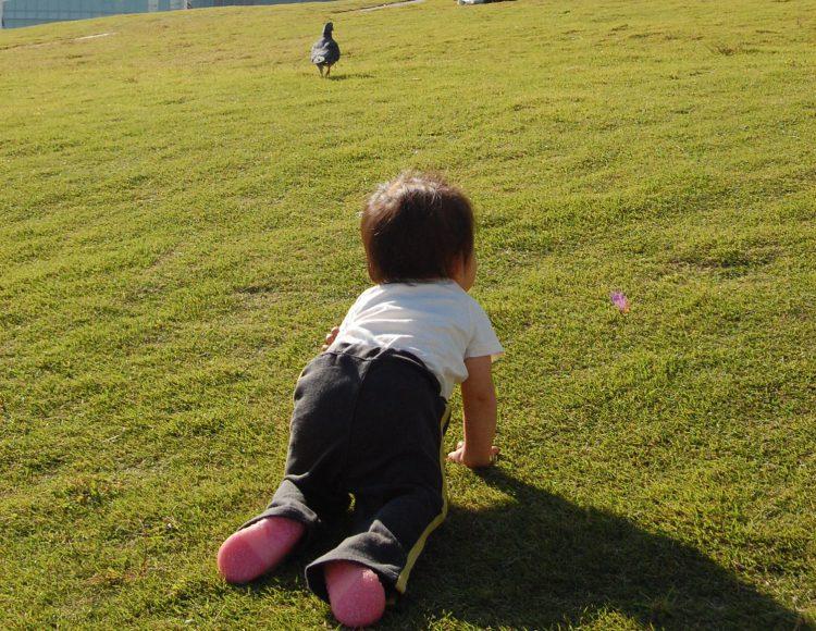 写真 芝生でハイハイする子ども